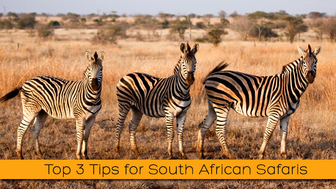 Top-3-Tips-for-South-African-Safaris