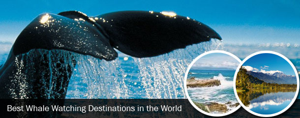 Best-Whale-Watching-Destinations-in-the-World