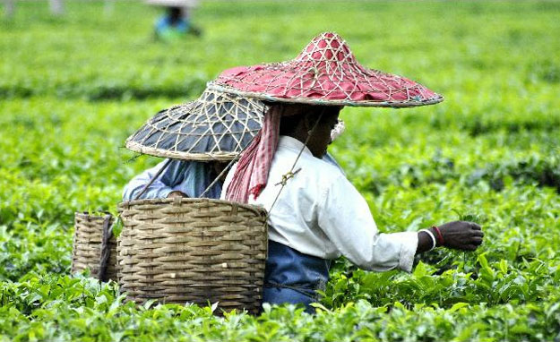 Tea gardens of Assam by Arun Bharali / CC BY