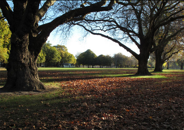 Hagley Park, Christchurch by Profernity / CC BY