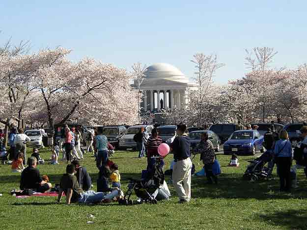 National Cherry Blossom Festival  by J C/ CC BY