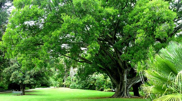 Adelaide Botanic Garden by Les Haines/ CC     BY