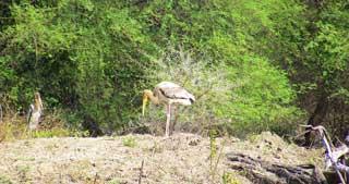 Bharatpur Sanctuary