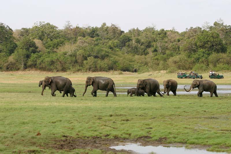 srilanka-wildlife
