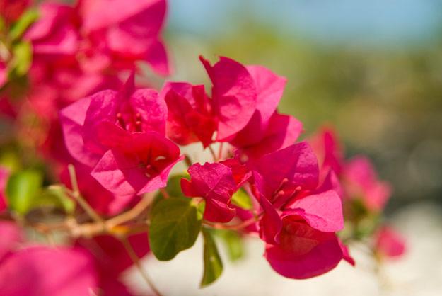 flower-fest