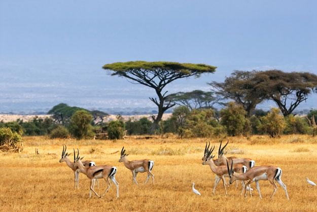 south-africaa