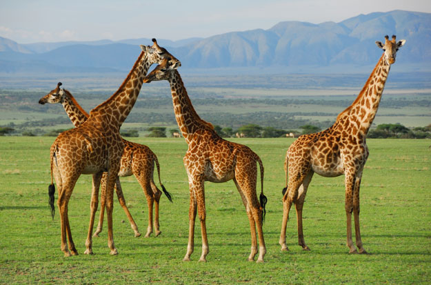 Pilanesberg-Game-Reserve