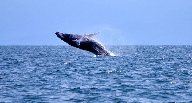 header-whale