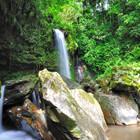 Daintree-rainforest-th