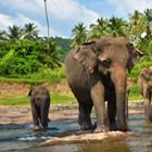 srilanka-th